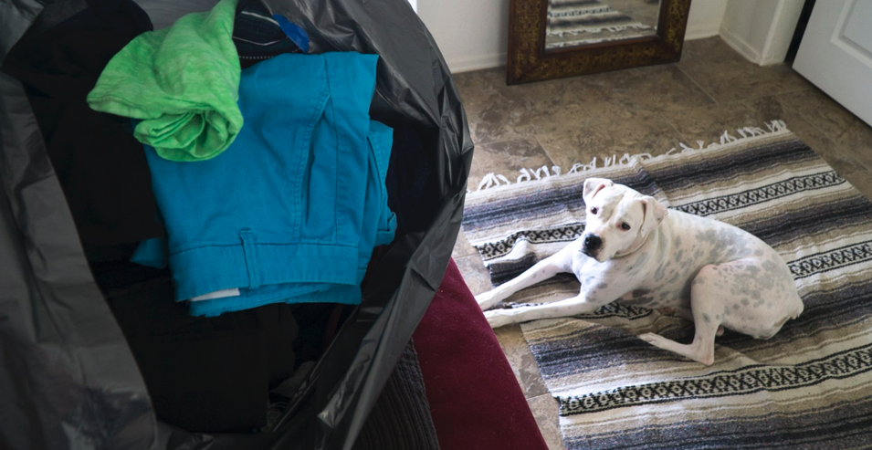 Cleaning out the closets while our dog supervises