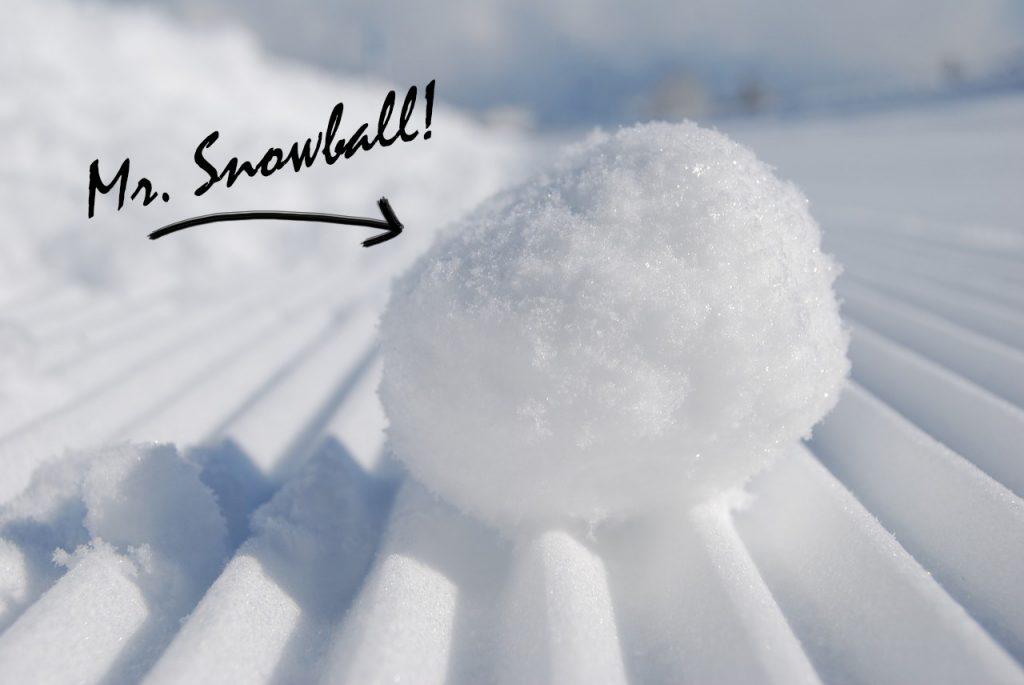 Mr. Snowball!